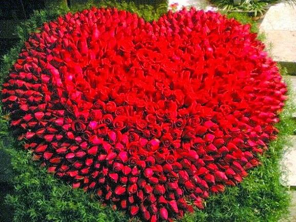 Hinh-hoa-hong-cho-valentine-2