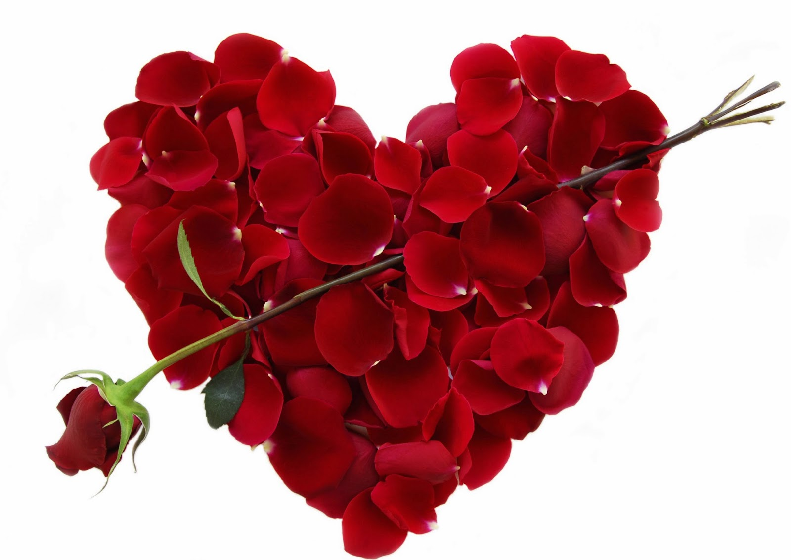 Hinh-hoa-hong-cho-valentine-6