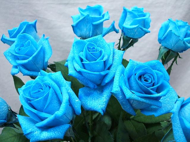 hoa-hong-xanh-dep-tang-nguoi-yeu-ngay-valentine-4