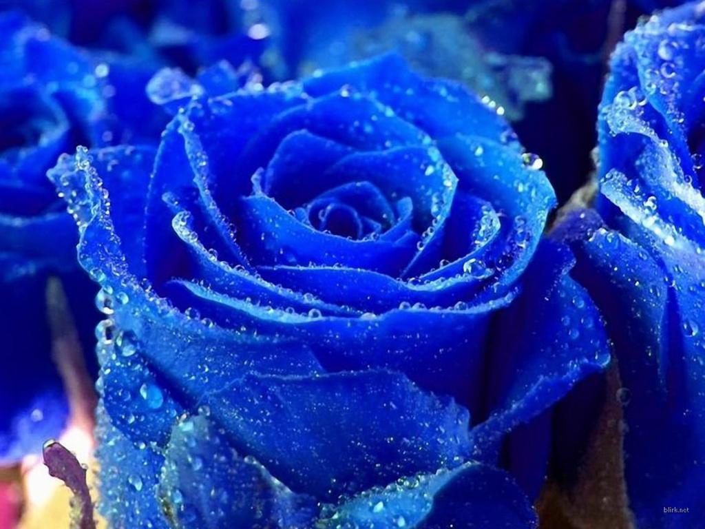 hoa-hong-xanh-dep-tang-nguoi-yeu-ngay-valentine-5