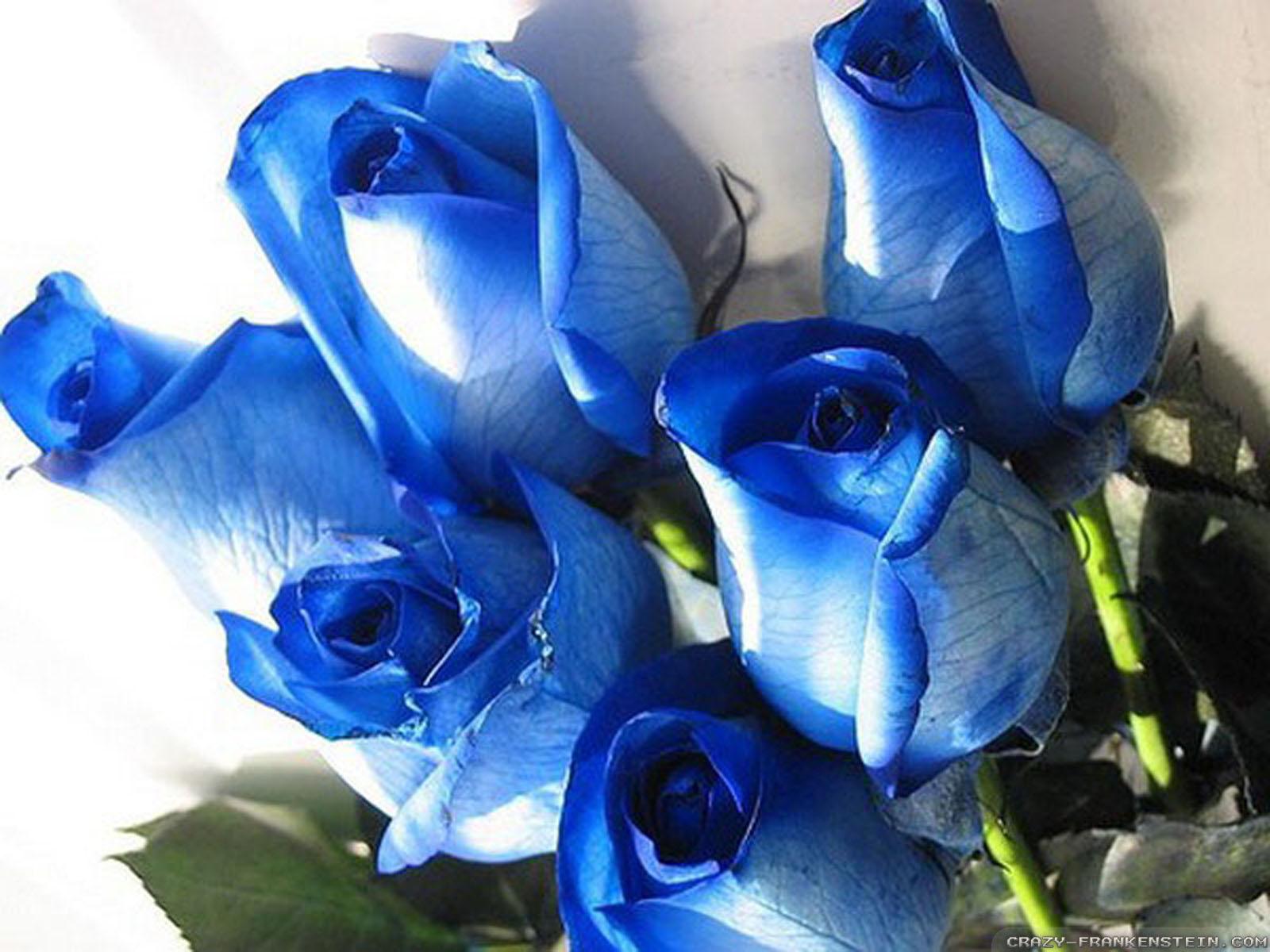 hoa-hong-xanh-dep-tang-nguoi-yeu-ngay-valentine-8