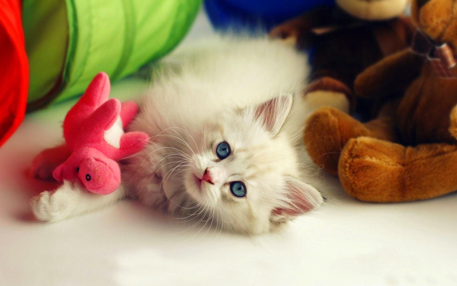 M o con p v i nh ng nh n n m o con d th ng h nh nh - Cute kittens hd wallpaper free download ...