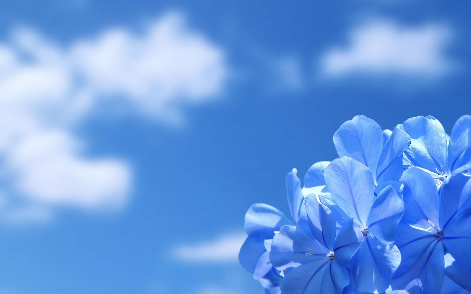 hinh-nen-dep-anh-nen-hoa-dep-Flower-wallpaper-1