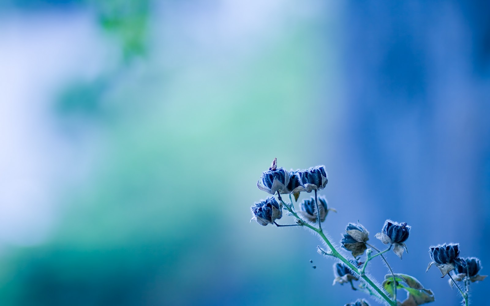 Hình nền hoa đẹp nhất wallpaper full hd hinh-nen-dep-anh-nen-hoa-dep-Flower-