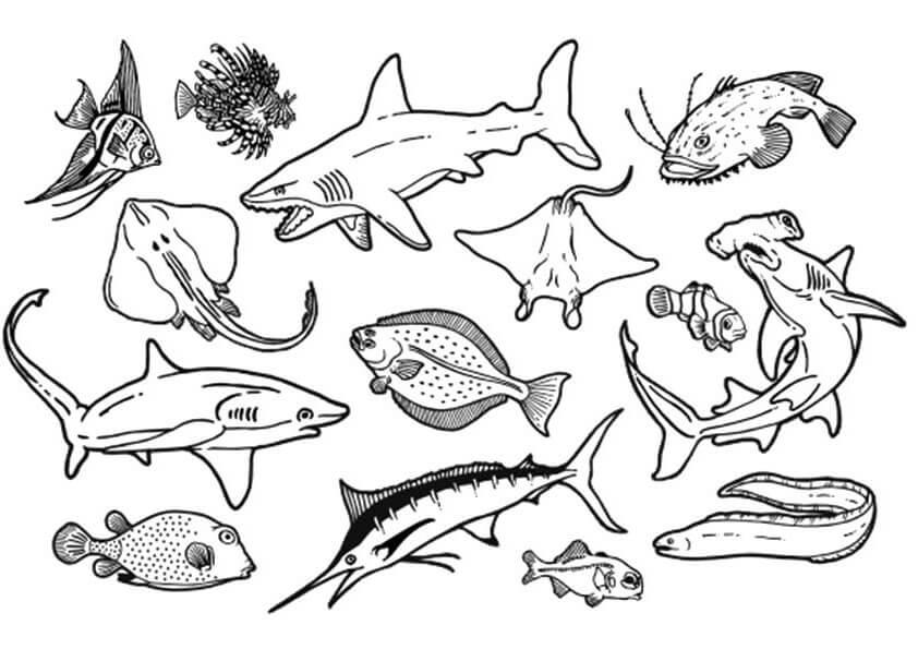 Image result for Tranh tô màu động vật