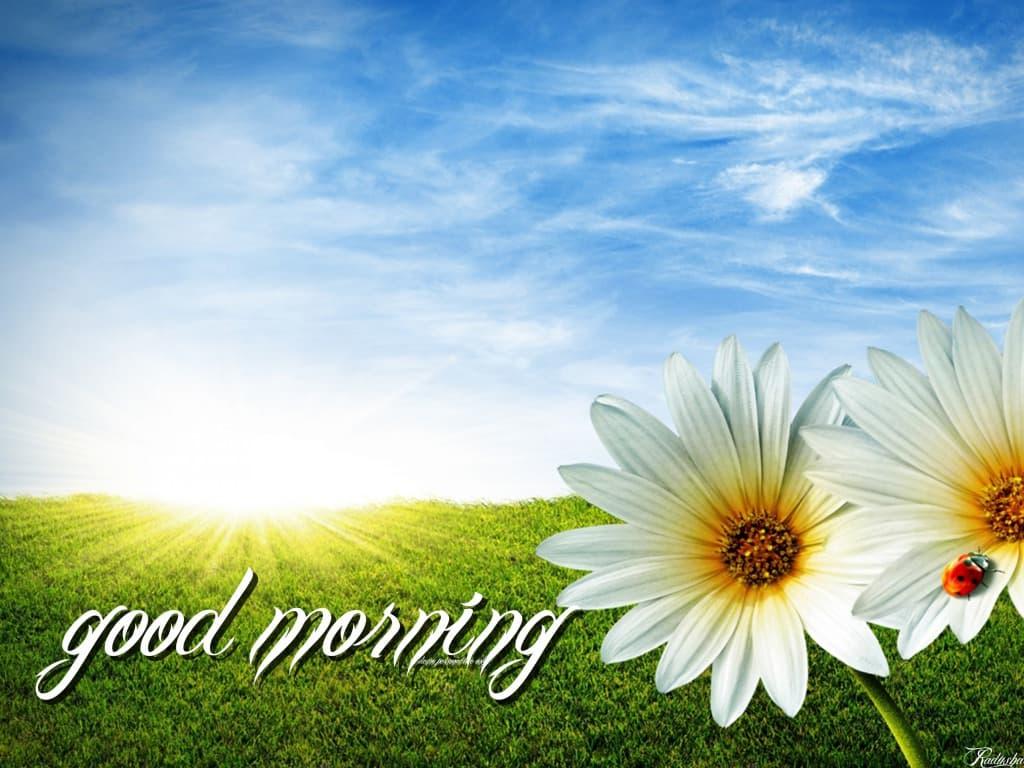 Hình ảnh chào buổi sáng với cánh đồng cỏ xanh ngắt tạo sự sảng khoải cho bạn vào buổi sáng với một hình ảnh thiên nhiên tươi đẹp nhất.