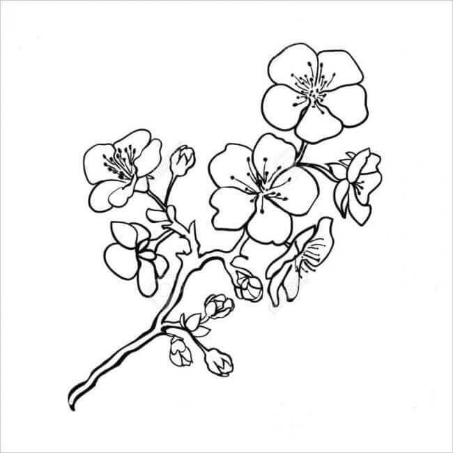 hoa mai-dao-tet